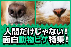 ヒゲは人間だけのものではないのです!なんと動物のヒゲは人間には真似できない超絶機能があったり…!その秘密を大特集!